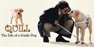 [Phim] Chú chó dẫn đường